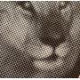 "(10"") WAREIKA HILL SOUNDS - KUMINA MENTO RASTA"